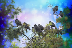 Dreamy winter scene with starling birds sittin on the tree branches in the garden Stock Images