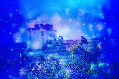 Dreamy winter scene with starling birds sittin on the tree branches and with the roof anc chimney in the background in the garden Royalty Free Stock Photography