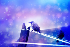 Dreamy winter scene two starling birds sittin on wire with bokeh lights Royalty Free Stock Photo