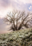 Dreamy Winter Tree Royalty Free Stock Photos