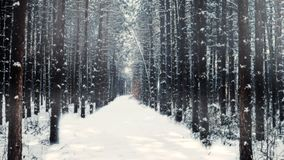 Dreamy woods. An experiment with processing the winter scene Stock Image