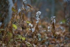 Dreary autumn foliage along Bruce Trail. Dying vegetation along Ontario trail royalty free stock photography