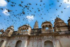 Dreef van duiven door de tempel Royalty-vrije Stock Fotografie