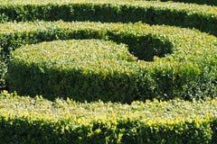 Dreen arbusto no parque Imagens de Stock Royalty Free
