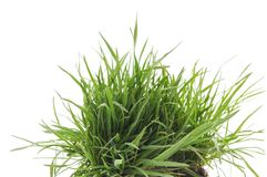 Grass with roots. Dreen grass with roots on a white background Royalty Free Stock Image