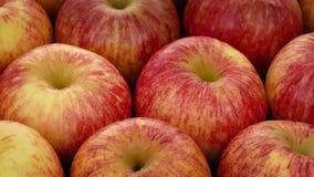 Drehende Äpfel stock video