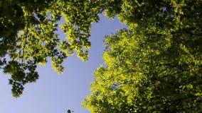 Drehende Ansicht über blauen Himmel zwischen Bäumen stock video footage