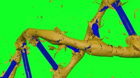 Drehende blaue DNA-Bildung über die Schale der goldenen Haut mit grünem Hintergrund lizenzfreie abbildung