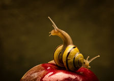 Drehende Schnecke auf einem Apfel Stockfotos