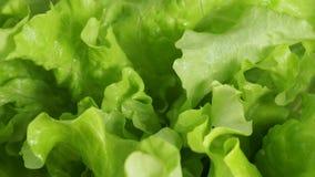 Drehende und frische nass grüne Kopfsalatsprühblätter stock footage