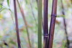 Drehenschwarzes des Bambusses Lizenzfreie Stockfotos