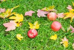 Drei Äpfel im Gras mit gefallenen Blättern Lizenzfreie Stockbilder