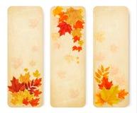 Drei abstrakte Herbstfahnen mit Farbblättern Stockbild