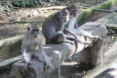 Drei Affen auf einer Bank Stockfotos
