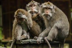 drei Affen und Baby in einem Tempel Stockfoto