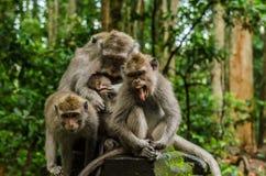 drei Affen und Babygrimassen im Tempel Lizenzfreie Stockbilder