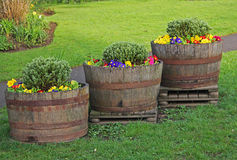 Drei alte Fässer Blumen Stockfotografie