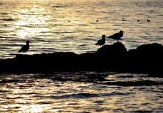 Drei alte Vögel. Stockbild
