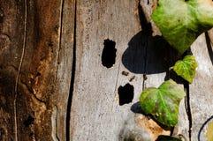 Drei Ameisen, die nach Nahrung suchen Stockfotos