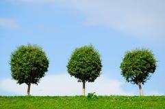 Drei aufgerundete Bäume Stockfotografie