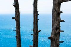 Drei Bäume Stockfotos