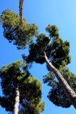 Drei Bäume Stockbilder