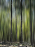 Drei Bäume Lizenzfreie Stockfotografie