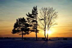 Drei Bäume Stockfoto