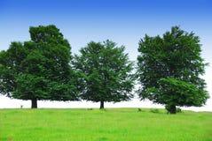 Drei Bäume auf einem grünen Feld stockbilder