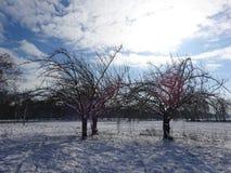 Drei Bäume, die den Winterschnee verwittern Lizenzfreies Stockfoto