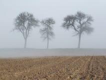 Drei Bäume im Nebel Lizenzfreie Stockfotos