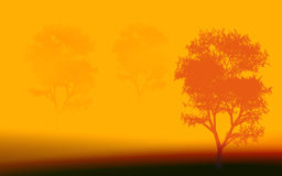 Drei Bäume morgens Lizenzfreie Stockfotos