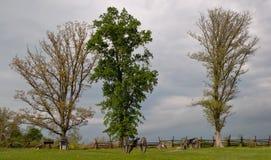 Drei Bäume und Kanonen in Gettysburg lizenzfreie stockbilder