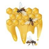 Drei Bienen und Bienenwaben Lizenzfreie Stockbilder