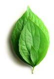 Drei Blätter