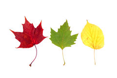 Drei Blätter Stockfotos