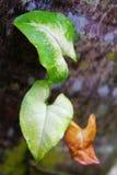 Drei Blätter stockfotografie