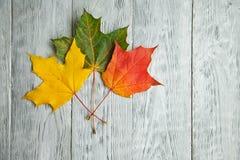 drei Blätter auf dem grauen hölzernen Hintergrund Stockfotografie