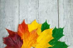 drei Blätter auf dem grauen hölzernen Hintergrund Stockbild