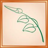 Drei Blätter auf Zweig im Feld Stockfotografie