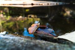 Drei Blätter im See stockfotos