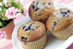 Drei Blaubeere-Muffins Lizenzfreies Stockfoto