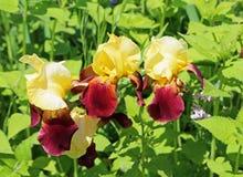 Drei Blendenblumen Lizenzfreie Stockbilder