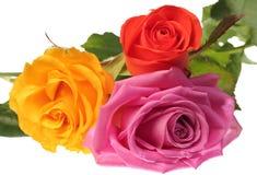 Drei Blumen Stockfoto