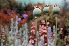 Drei Blumen Makro auf dem rosa Hintergrund Lizenzfreie Stockbilder