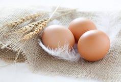 Drei braune Eier Lizenzfreies Stockfoto