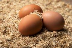 Drei braune Eier auf Sägemehl Lizenzfreies Stockfoto