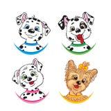 Drei Dalmatiner und ein Yorkshire Terrier Stockbild