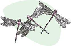 Drei Dragonflys Lizenzfreies Stockbild