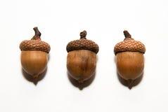 Drei Eicheln mit Hüten an über Weiß Stockfoto